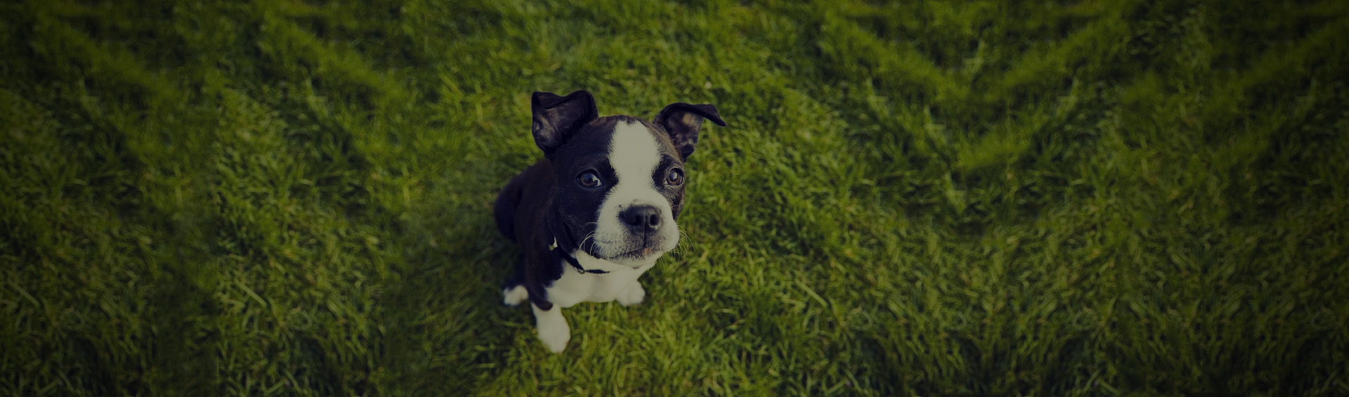 dog-on-lawn-as-Smart-Object-1