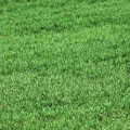 Lawn Treatment For Dog Urine