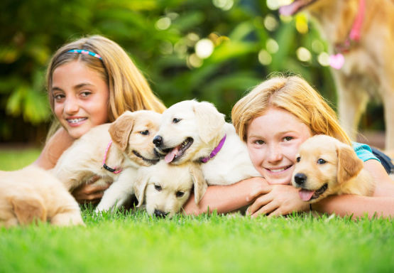 Girls with Puppies on Lawn