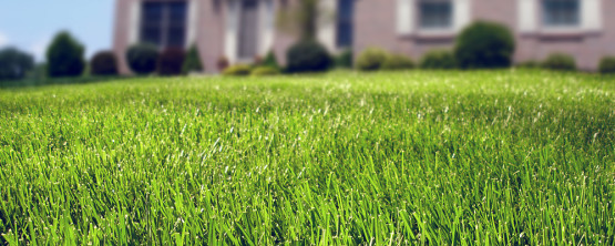 Improve Your Lawn By Improving Your Clay Soil